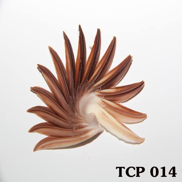 hoa-socola-thanh-pham-tcp14