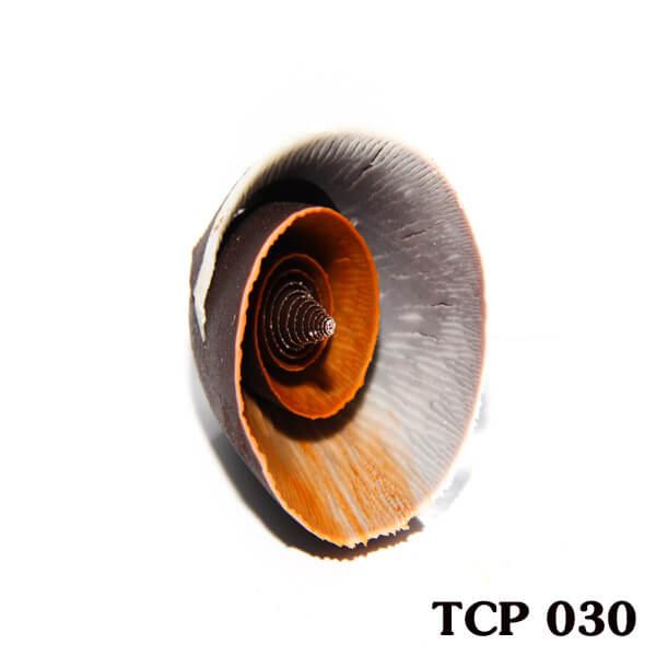 hoa-socola-thanh-pham-tcp30