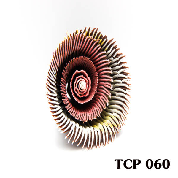 hoa-socola-thanh-pham-tcp60