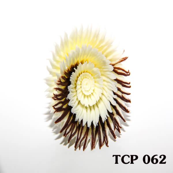 hoa-socola-thanh-pham-tcp62