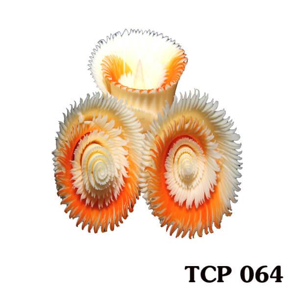 hoa-socola-thanh-pham-tcp64