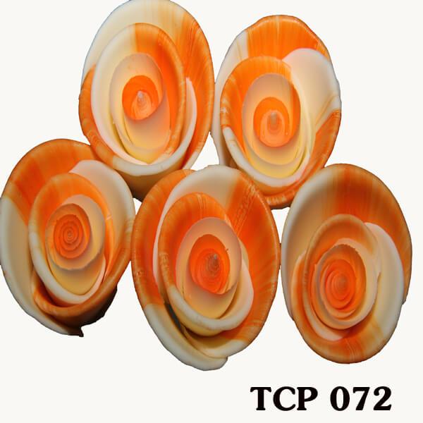 hoa-socola-thanh-pham-tcp72